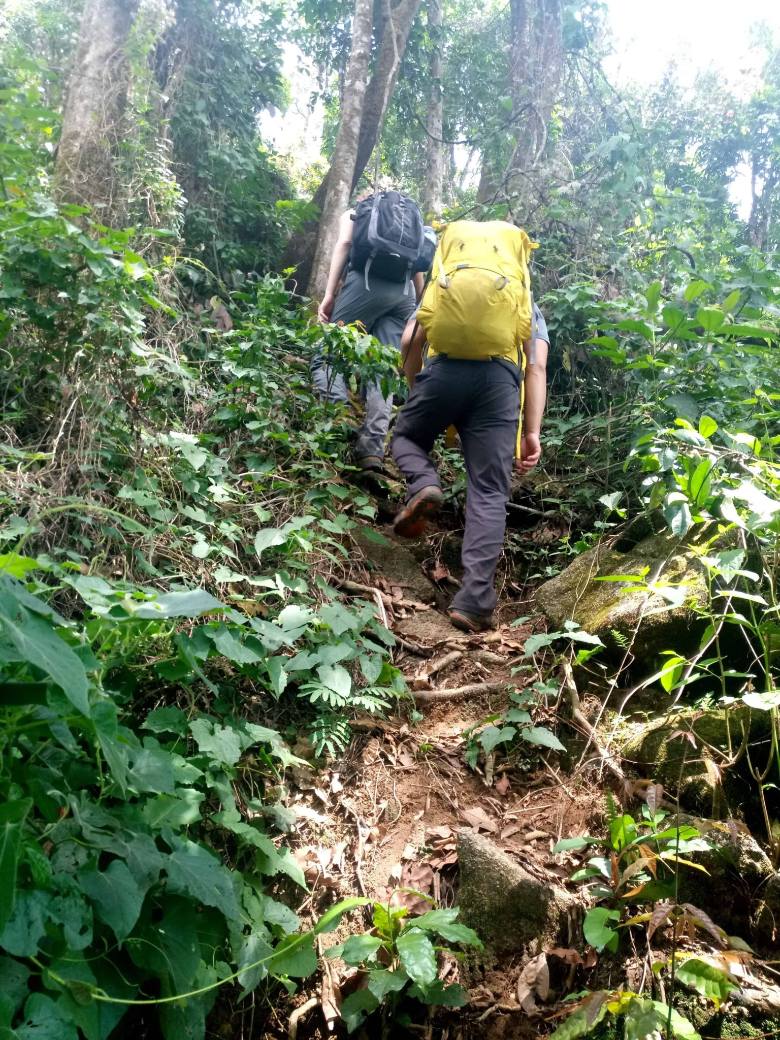 "Steep ""trail"" on Bintumani"