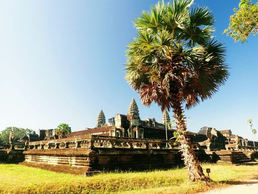 View of Angkor Wat and a palm tree from a back entrance