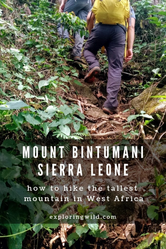 Steep jungle trail with text overlay: Mount Bintumani Sierra Leone: how how to hike the tallest mountain in West Africa
