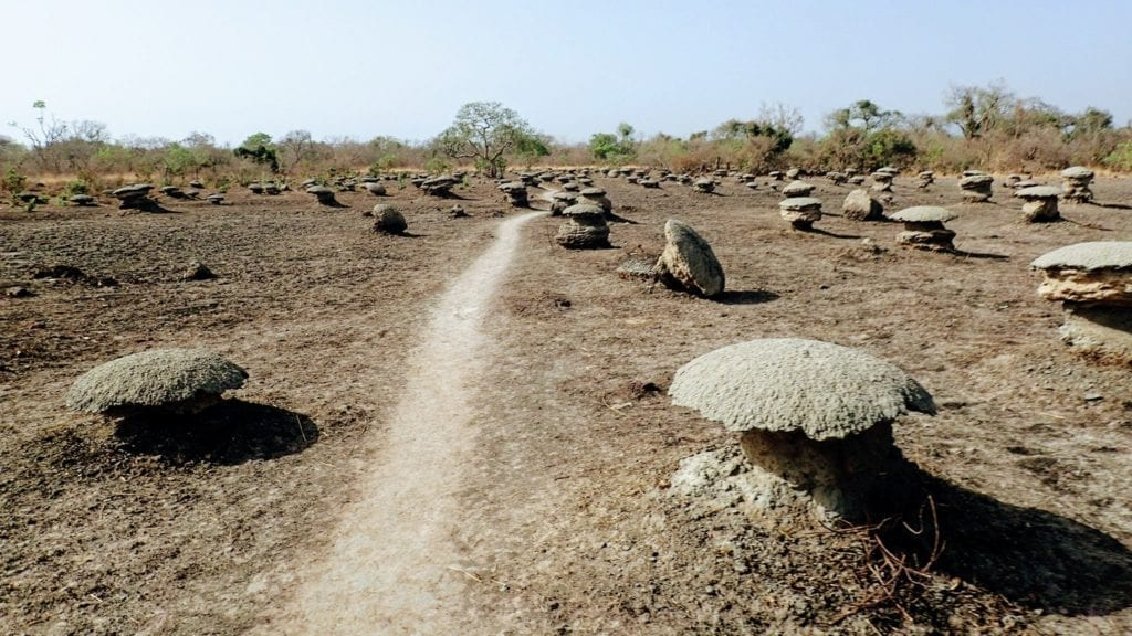 A narrow trail cuts through dry land in Senegal studded with large termite hills that look like mushrooms.