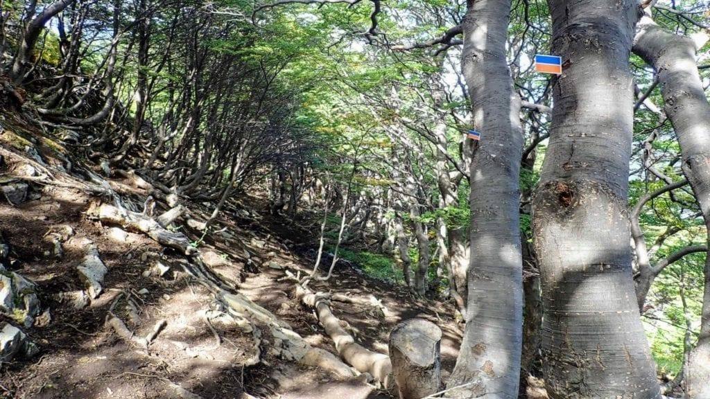 Trail marking on Vinciguerra Glacier trail