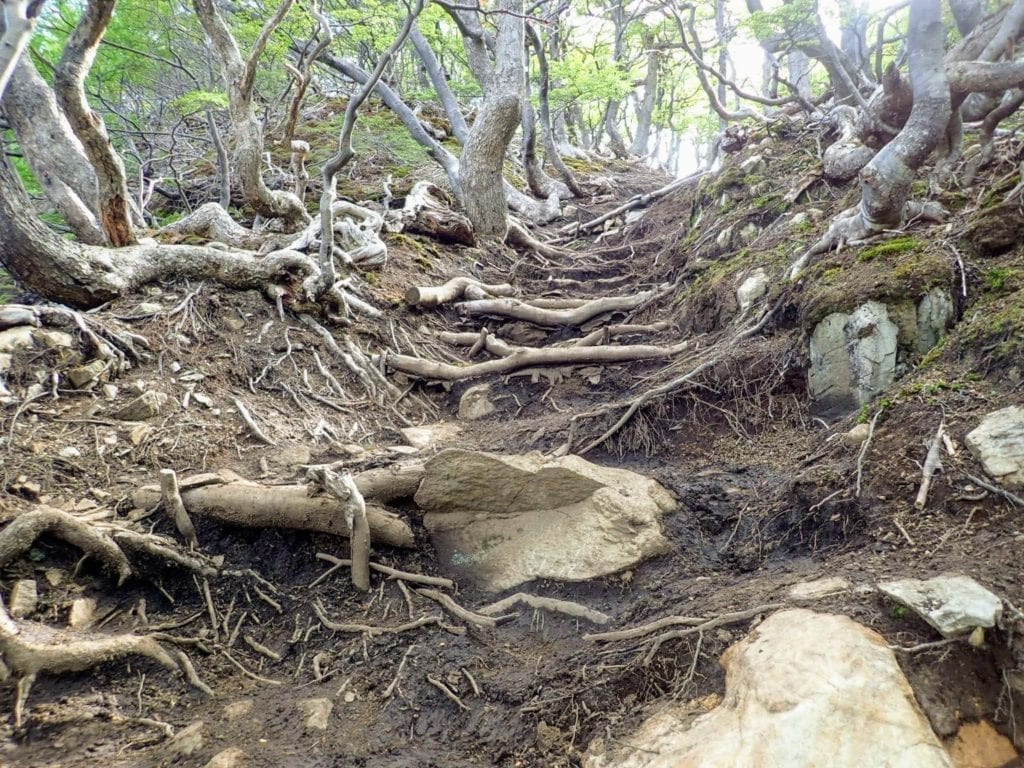 Rough trail with lots of roots and rocks on the way to Vinciguerra Glacier