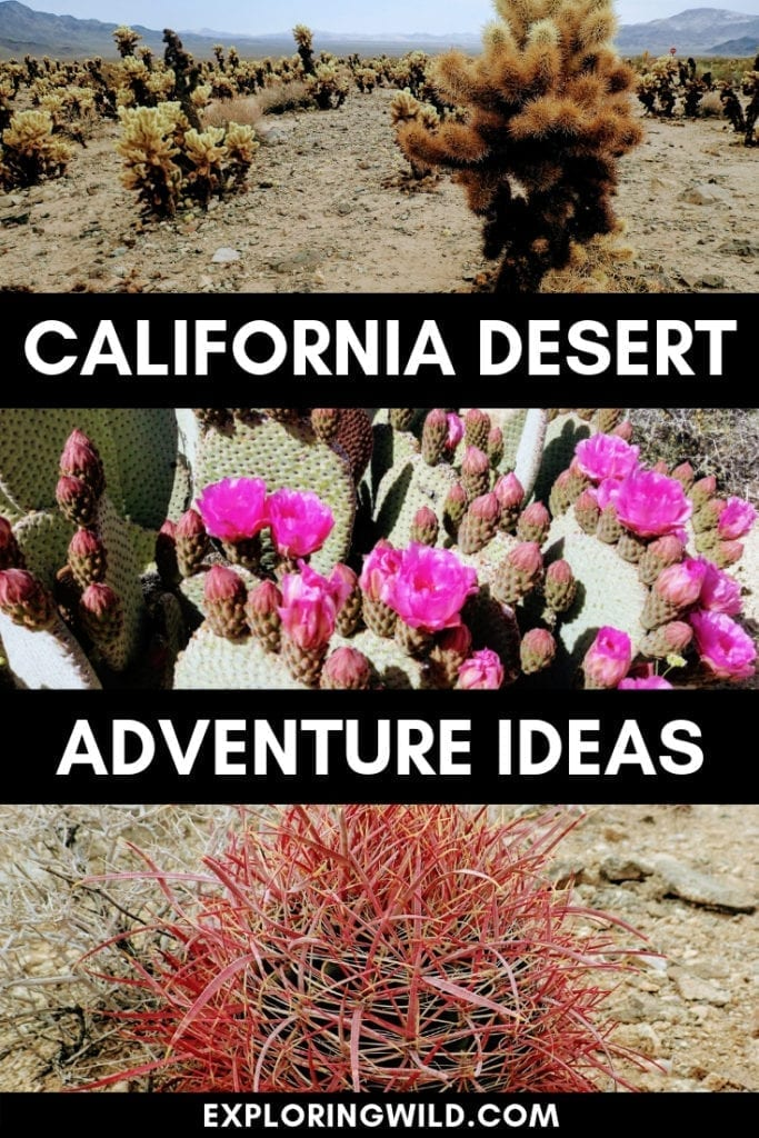 Three pictures of desert plants with text overlay: California desert adventure ideas.