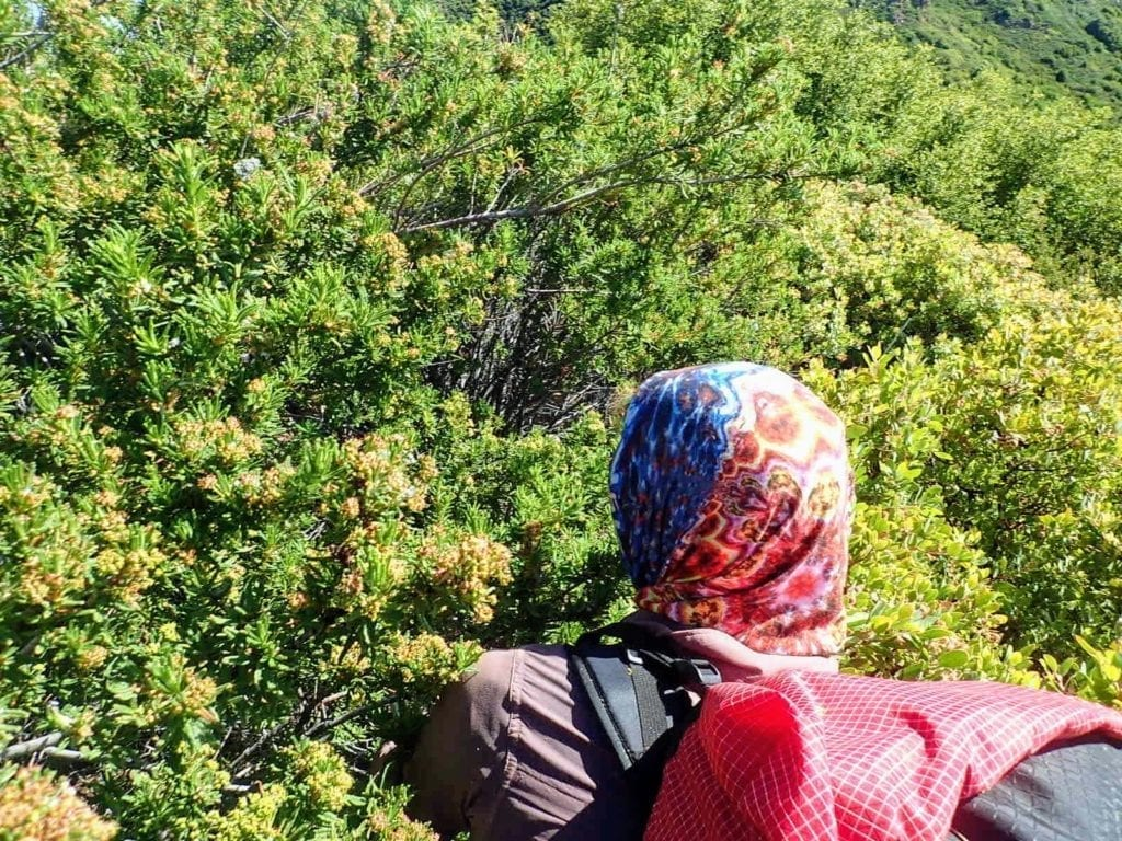 Hiker pushes through thick green bushes