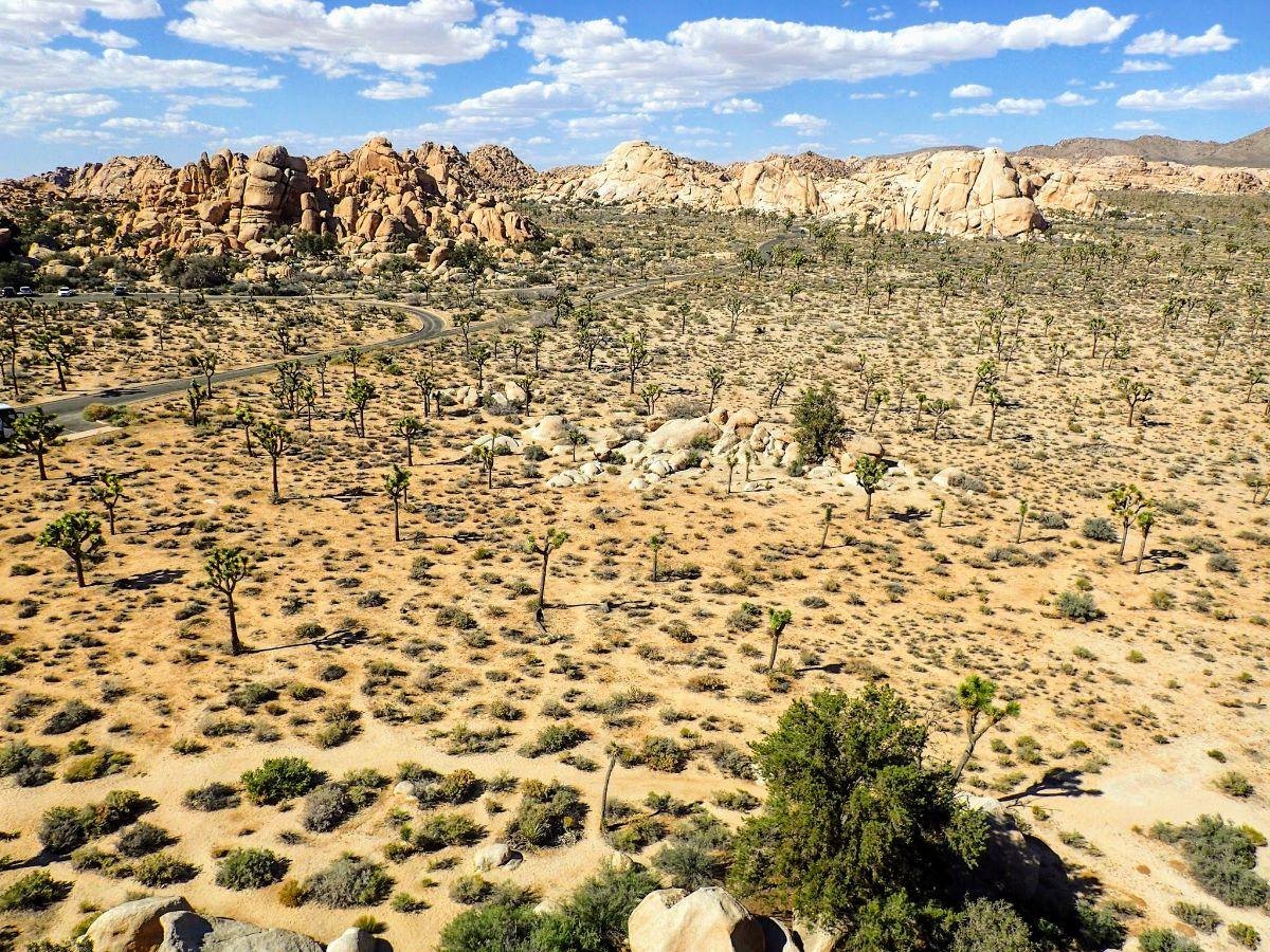 View of Joshua Tree National Park desert floor