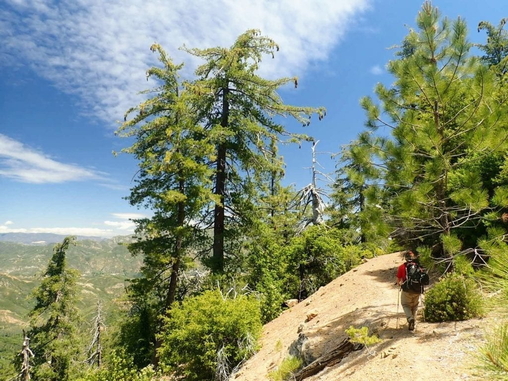 Backpacker hikes North Coast Ridge Trail surrounded by pine trees