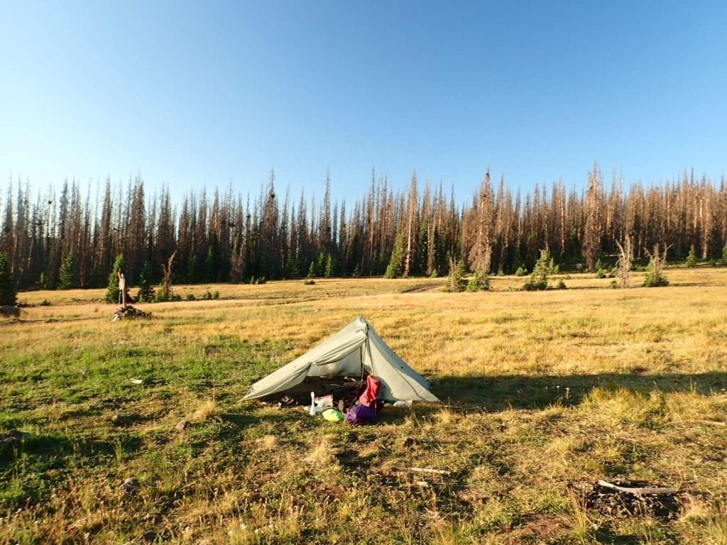 Avoiding dead trees while camping on the Colorado Trail