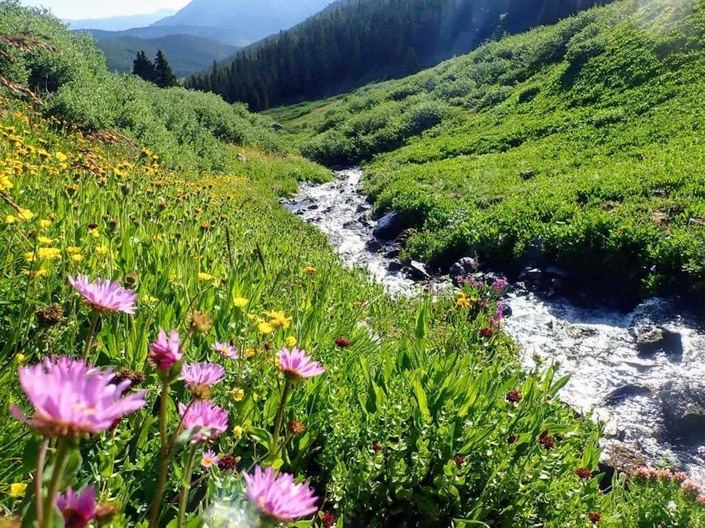 Wildflowers beside high mountain stream on segment 8 of the Colorado Trail