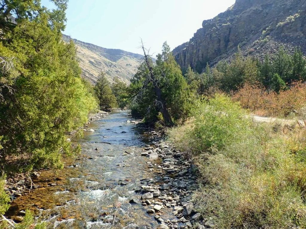Jarbidge River flows by trees and dirt road in northern Nevada