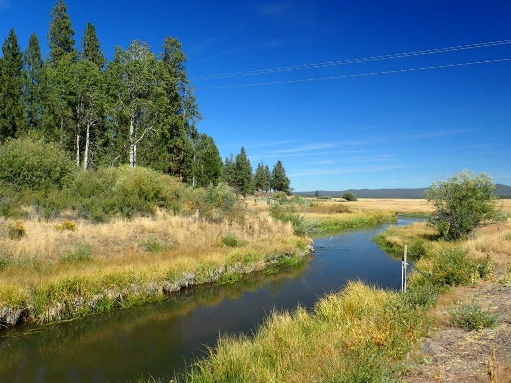 Small river runs through grassy plains and pine trees