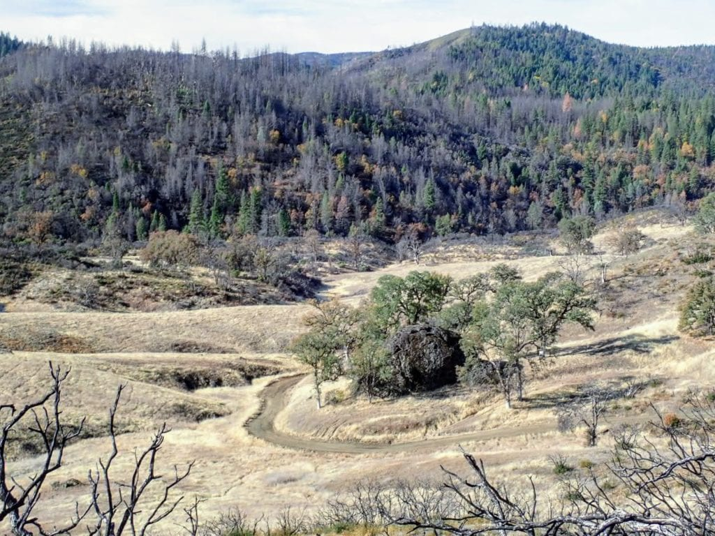 Dirt road winds through golden hills