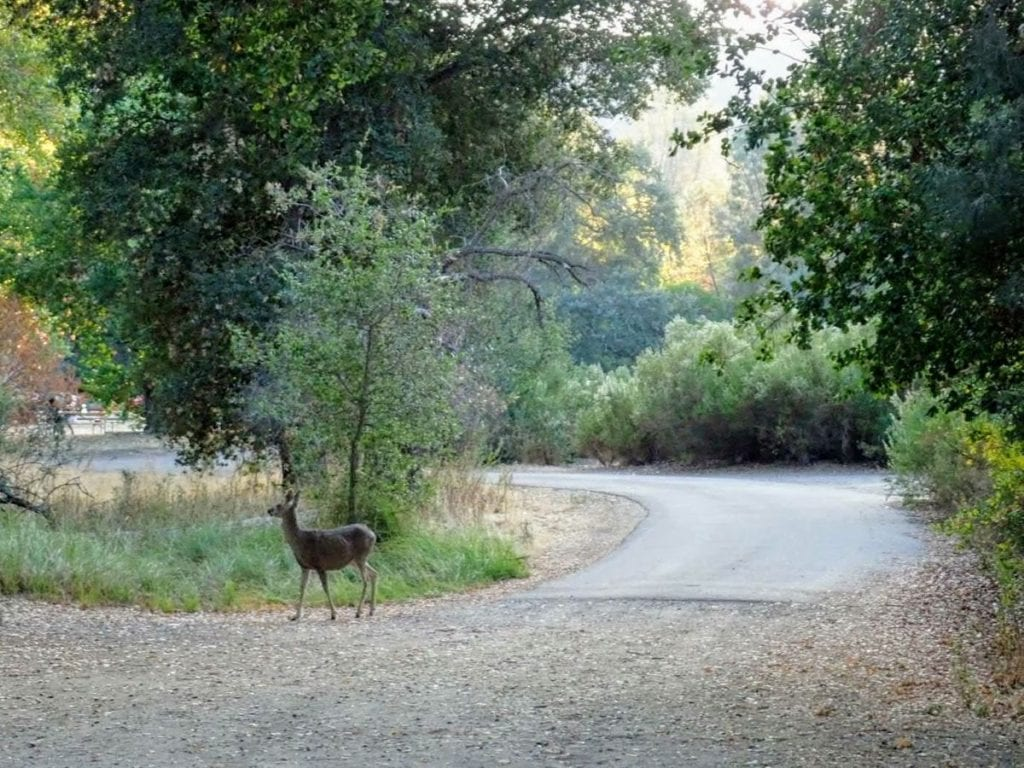 A deer stands on a gravel road