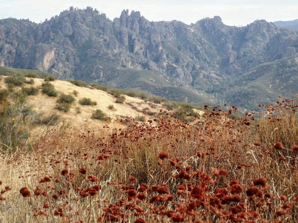 Pinnacles peaks in background with red flowers in foreground
